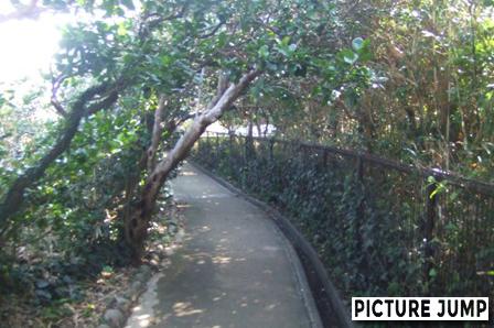 足摺岬 ジャングル