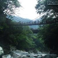 日本三奇橋のひとつ、かずら橋は原始的な吊り橋