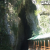 秋芳洞 巨大鍾乳洞内の温度は年間一定17℃