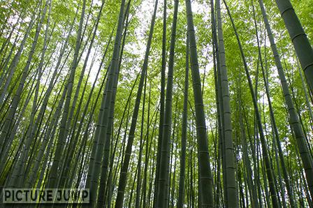 京都・嵐山 竹林の道 静けさに包まれた癒しの散策路