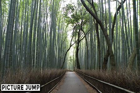 京都・嵐山 竹林の道 大河内山荘前から撮影