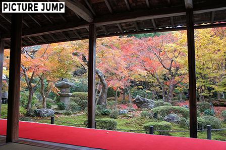圓光寺本堂縁側 赤い緋毛氈越しに眺める十牛之庭の紅葉