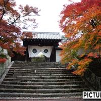 曼殊院門跡 勅使門や白い壁に映える紅葉