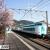 那智駅で緋寒桜が開花したら春の訪れ。通過中の特急くろしおとのコラボ