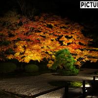 南禅寺 天授庵で見た!芸術的な紅葉ライトアップ