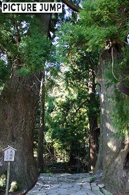 熊野那智大社参拝 大門坂 樹齢800年の夫婦杉
