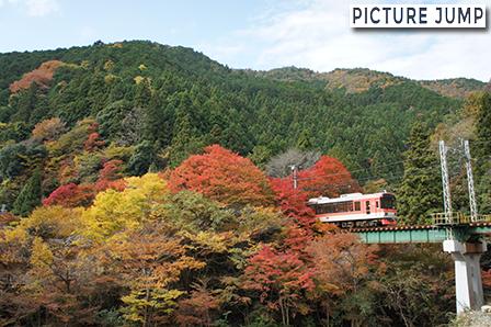紅葉でオレンジに染まった叡山電車