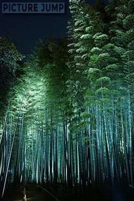 春の高台寺、緑が鮮やかな竹林