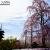 東寺・五重塔と咲き誇る立派な枝垂桜。散った桜がピンクの絨毯に