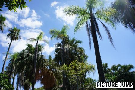 奄美の里で離島・奄美大島の南国気分を味わう