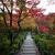 宝筐院 紅葉に包まれた敷石の参道を狙い撮り