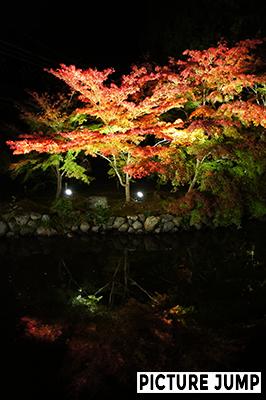 知恩院紅葉ライトアップ友禅苑の池