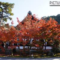 秋はもみじの永観堂。紅葉に包まれた多宝塔