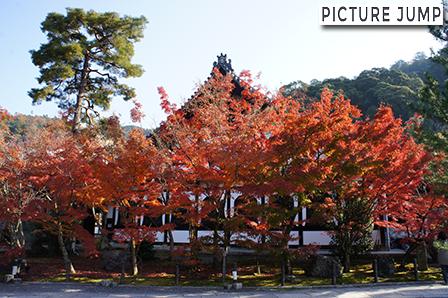 永観堂 中門を入って正面の鶴寿台前に広がる紅葉