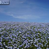 青い空、青い丘。国営ひたち海浜公園のネモフィラの丘。死ぬまでに一度は見ておきたい絶景スポット