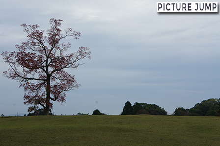 これも奈良公園