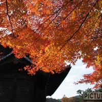 南禅寺の中門と三門(天下竜門)で紅葉撮影