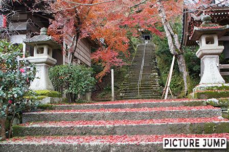 二尊院の紅葉 本堂の横、法然上人廊へと続く階段の敷き紅葉