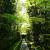 新緑と竹林と苔。緑に包まれた大徳寺高桐院。参道と客殿を独り占め
