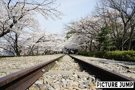 蹴上インクライン 敷かれたレールと桜のトンネル