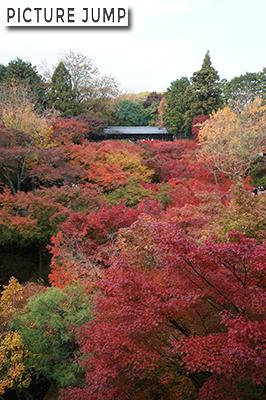 東福寺・紅葉。通天橋から臥雲橋を眺めて