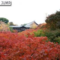 東福寺 三名橋。紅葉に包まれた通天橋と臥雲橋は早朝でも超満員