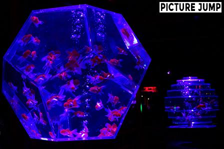 三稜鏡水槽・ギヤマンリウム 京都・二条城 アートアクアリウム城 ~京都・金魚の舞~ 2014