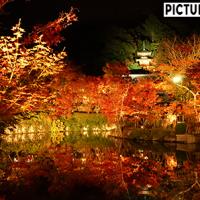 永観堂 ライトアップ。光に照らされて紅葉の上質さがより際立つ