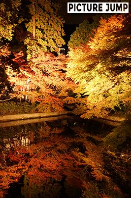 成就院の正門前の池に映し出された紅葉