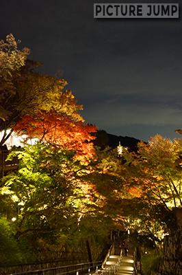 紅葉に包まれた子安塔もライトアップ