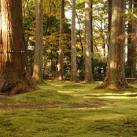 秋の大原 三千院 庭園に敷かれた緑の苔に映えるオレンジや黄・黄緑や緑の紅葉