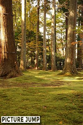 秋の大原三千院 散り紅葉は疎らで圧倒的に緑が勝ちますが、柔らかい日差しに苔が黄緑色に染まっているよう