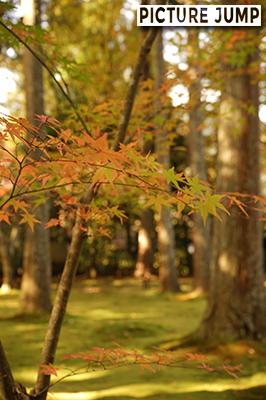秋の大原三千院 庭一面に敷かれた緑の苔に映えるオレンジや黄、黄緑や緑の紅葉