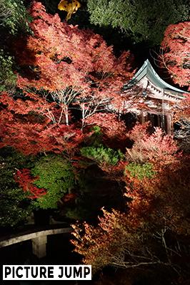 京都・山科 毘沙門堂  真っ赤に染まった紅葉に包まれた紅い弁才天堂