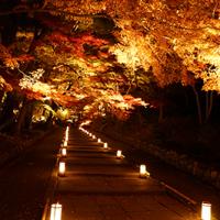 京都・山科 毘沙門堂  暖かく包まれた明かりと紅葉 ライトアップの共演