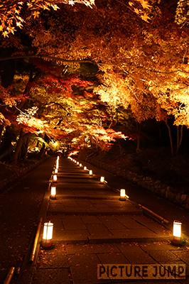 京都・山科 毘沙門堂 敷き紅葉の名所