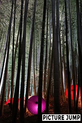 高台寺ライトアップ竹林に彩られた和傘