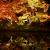 鷲峰山 高台寺 秋のライトアップ 臥龍池「水鏡」に移し照らされる紅葉に言葉を失う
