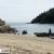 仙酔島 田ノ浦海岸で目撃した野生のタヌキ