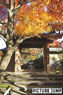 紅葉に覆われた光悦寺の参道