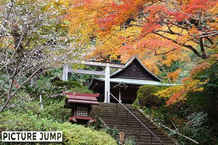 日向大神宮 十月桜と紅葉のコラボ