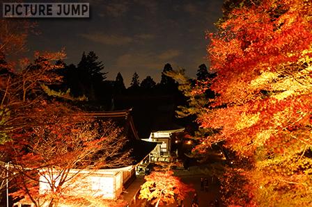 神護寺定番のカット 金堂 階段の上からライトアップされた紅葉と五大堂と毘沙門堂を撮影