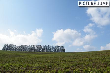 タバコのプロモーションに使用されたカラマツ林・マイルドセブンの丘