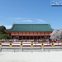 平安神宮、桜化粧。日本庭園でもある平安神宮神苑をぐるり1周