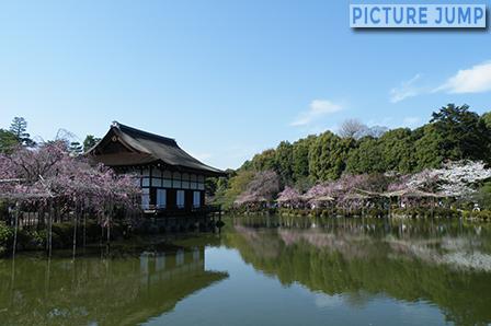 平安神宮 東神苑 尚美館と栖鳳池に浮かぶ桜