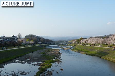 鴨川 桜散策