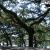 三保の松原は、天気が良ければ富士山を眺められる絶景スポット